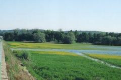 img131 24.5.04 dopo Villegusien, stagni ovunque; acqua anche sotto erbe verdi e fiorell gialli (volevo fotogr. il contrasto dei colori, ma ...)