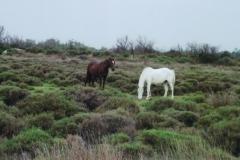 img119 12.5.2005, Foto ai ''soliti'' 2 cavalli, ''porta buono''